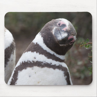 Magellanic Penguin Portrait Mouse Pad