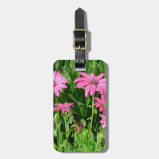 Magenta African Daisies Luggage Tag