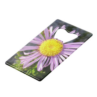 Magenta Aster - A Star of Love and Fidelity