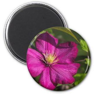Magenta Clematis Blossom 6 Cm Round Magnet