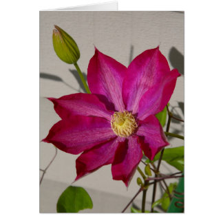 Magenta Clematis Card