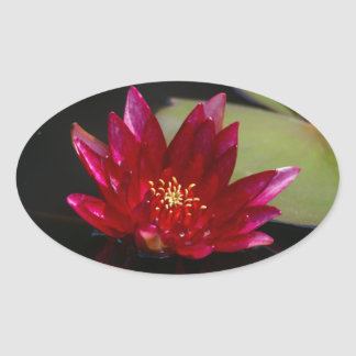Magenta Lotus Waterlily Oval Sticker