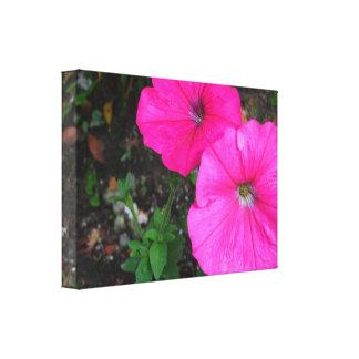 Magenta Morning Glory Flowers Canvas Print