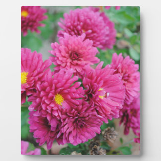 Magenta Mums Photo Plaque