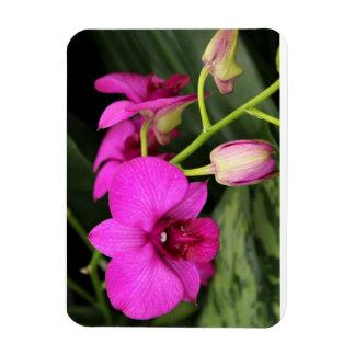 Magenta Orchid  Premium Magnet