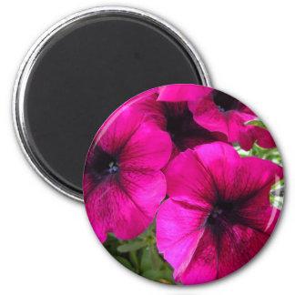 Magenta Petunias 6 Cm Round Magnet