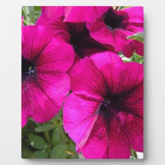 Magenta Petunias Photo Plaques