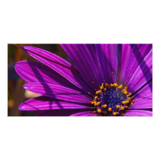 Magenta The African Daisy Photo Card Template