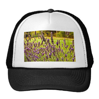 Magic Lavender Cap