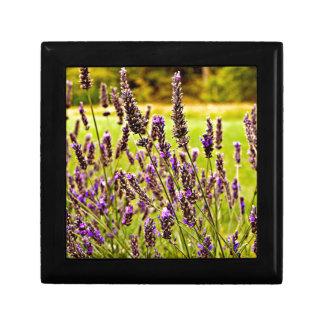 Magic Lavender Gift Box