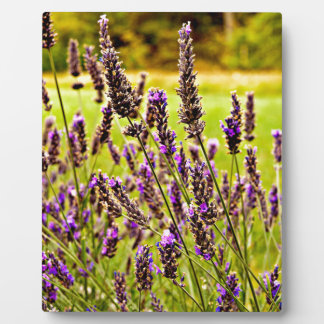 Magic Lavender Plaque