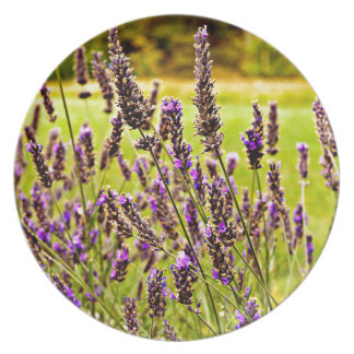 Magic Lavender Plate