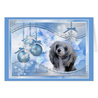 Magic of Christmas Chinese Crested Card