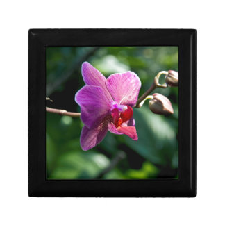 Magic orchid gift box