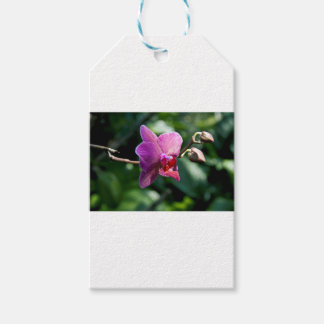 Magic orchid gift tags