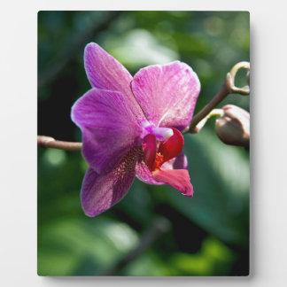 Magic orchid plaque