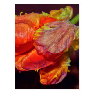 Magic talk Tulip Postcard