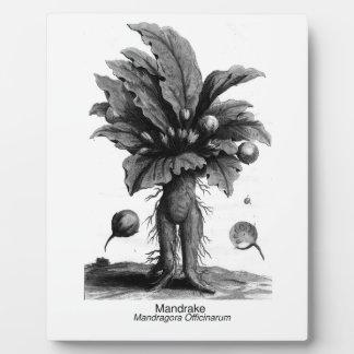 Magical Mandrake Plaque