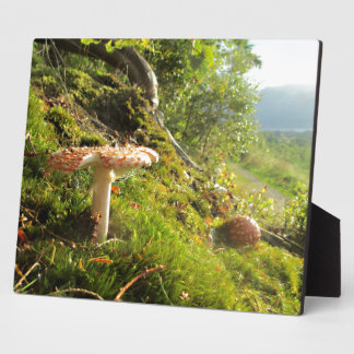 Magical Mushrooms 1 Plaques