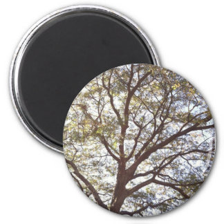 Magical Tree 6 Cm Round Magnet