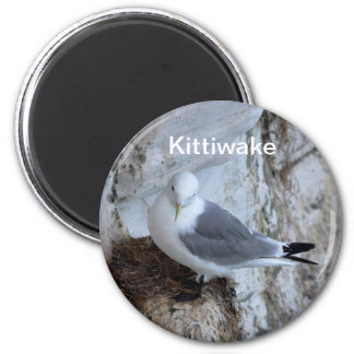 Magnet: Adult Kittiwake 6 Cm Round Magnet