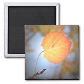 Magnet-Aspen Leaf Square Magnet