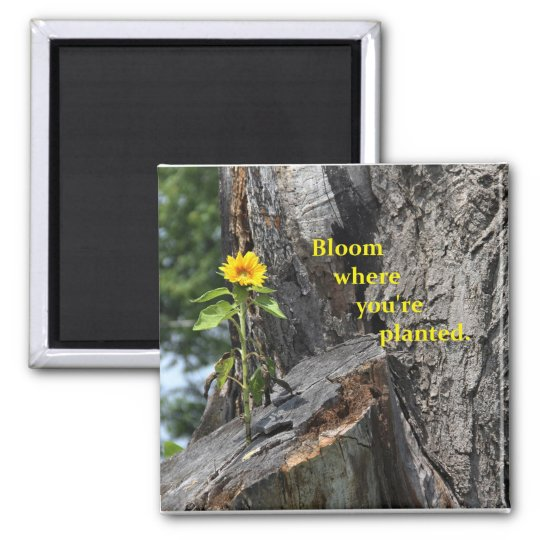 magnet - bloom where you're planted