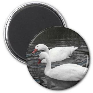 Magnet - Coscorba Swan Pair