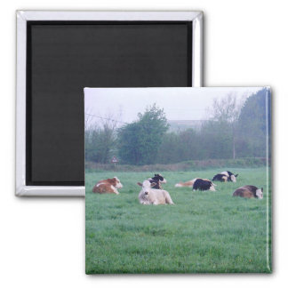 Magnet - Cows - In Colour