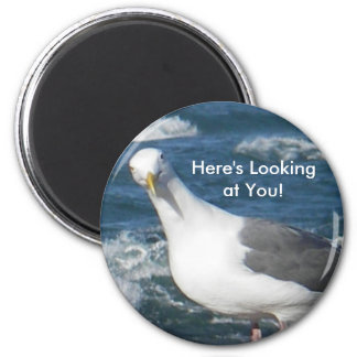 Magnet:  Looking Gull 6 Cm Round Magnet