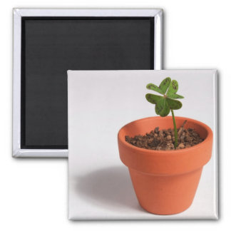 Magnet: Lucky Four-leaf Clover in a Clay Pot 2 Inch Square Magnet