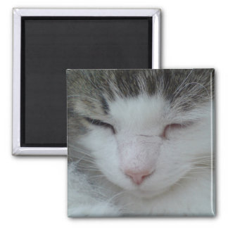Magnet - Maine Coon Cat Image 2