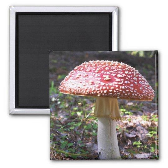 Magnet-Mushroom Magnet