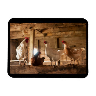 Magnet of Chickens in the Barn
