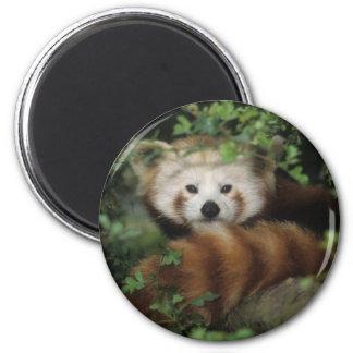 Magnet - red panda