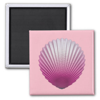 Magnet with beautilful seashell