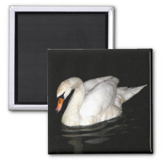 Magnet with Swan