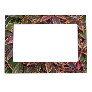MAGNETIC PICTURE FRAME WITH COLORFUL COLEUS LEAVES