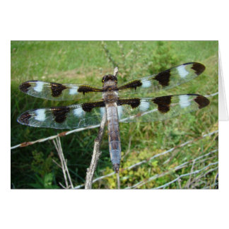 Magnificent Dragonfly Card