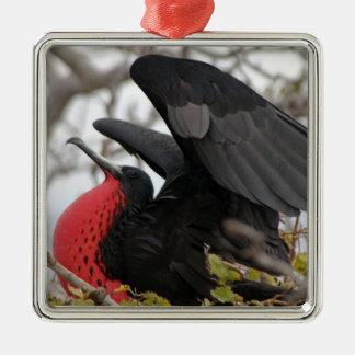 Magnificent Frigate Bird Silver-Colored Square Decoration