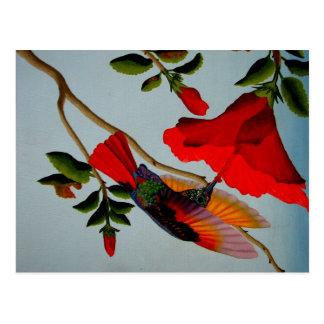 Magnificent Hummingbird Postcard