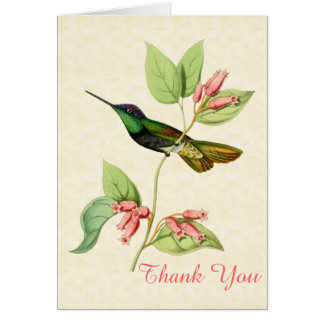 Magnificent Hummingbird Thank You Note Card