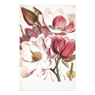 Magnificent Magnolia Stationery