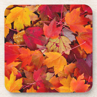 Magnificent Maple Leaves Coasters