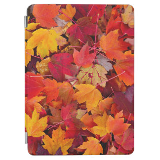 Magnificent Maple Leaves iPad Air Cover