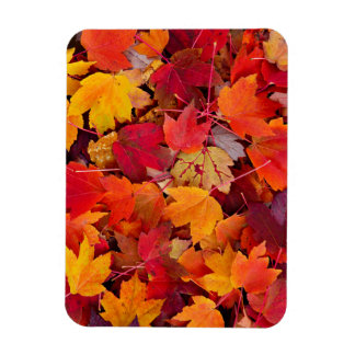 Magnificent Maple Leaves Rectangular Photo Magnet