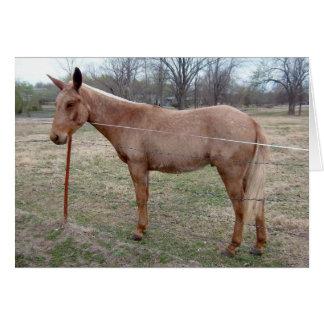 Magnificent Mule! customize it! Card