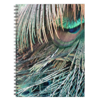 Magnificent Peacock  Feather Spiral Notebooks