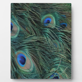 Magnificent Peacock Feathers Photo Plaques