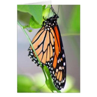 Magnifico Monarch card